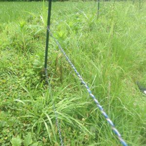 電柵 草刈り前