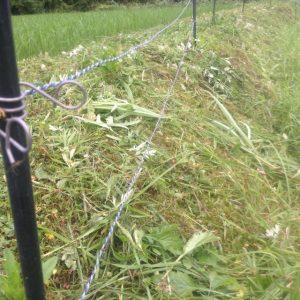 電柵 草刈り後