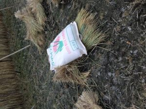 稲作 脱穀