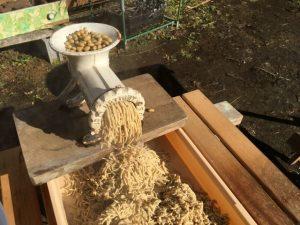 味噌作り 大豆を潰す